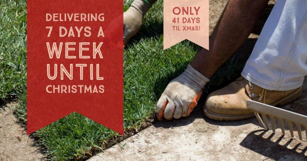 Delivering Turf Grass 7 Days A Week Until Xmas CT Lawns